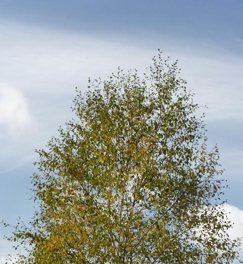 treef
