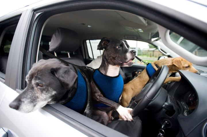 VW Commercial Dogs